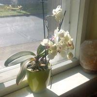 Sonnenschutzfolie-Orchideen