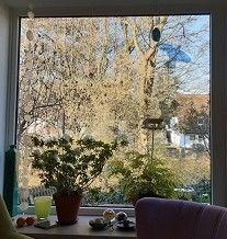 Vogelschlag - Vogelschutzfolie / Vogelschutzaufkleber für Fensterscheiben